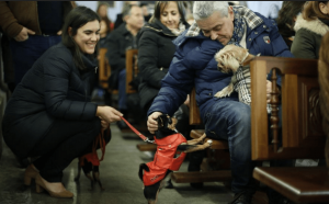 MASCOTAS BENDECIDAS EN LA ORDEN TERCERA